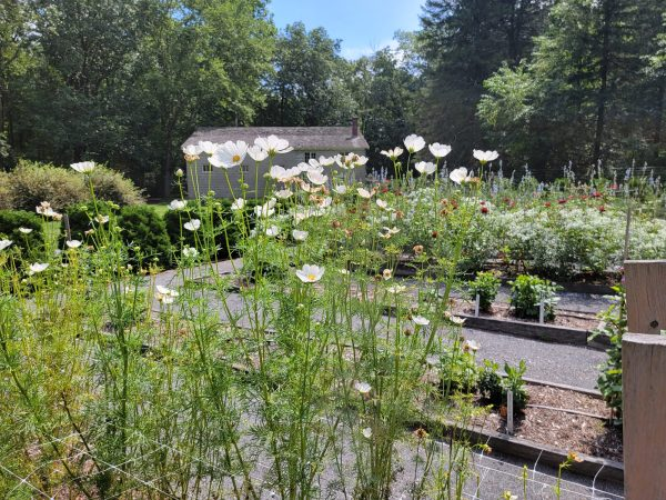 Scenes from the Stone Cottage Garden
