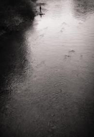 Lepedus-Sisko Peter - Roger Waters