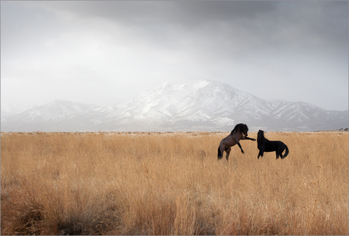 America's Last Mustangs Will be the Focus of The G2 Gallery's New Exhibit Nature LA: Jennifer MaHarry (1/2)