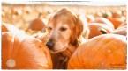 unravelling the secret for starbuck's pumpkin scones