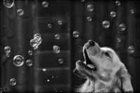 32-52 bubbles