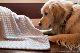 the mystery blanket
