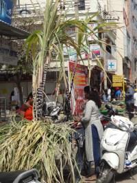 Stalks of sugarcane up for sale