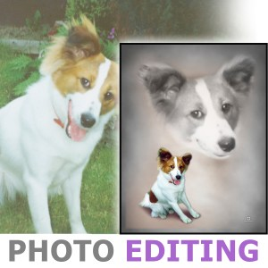 Photo Edit showing a photo of a dog