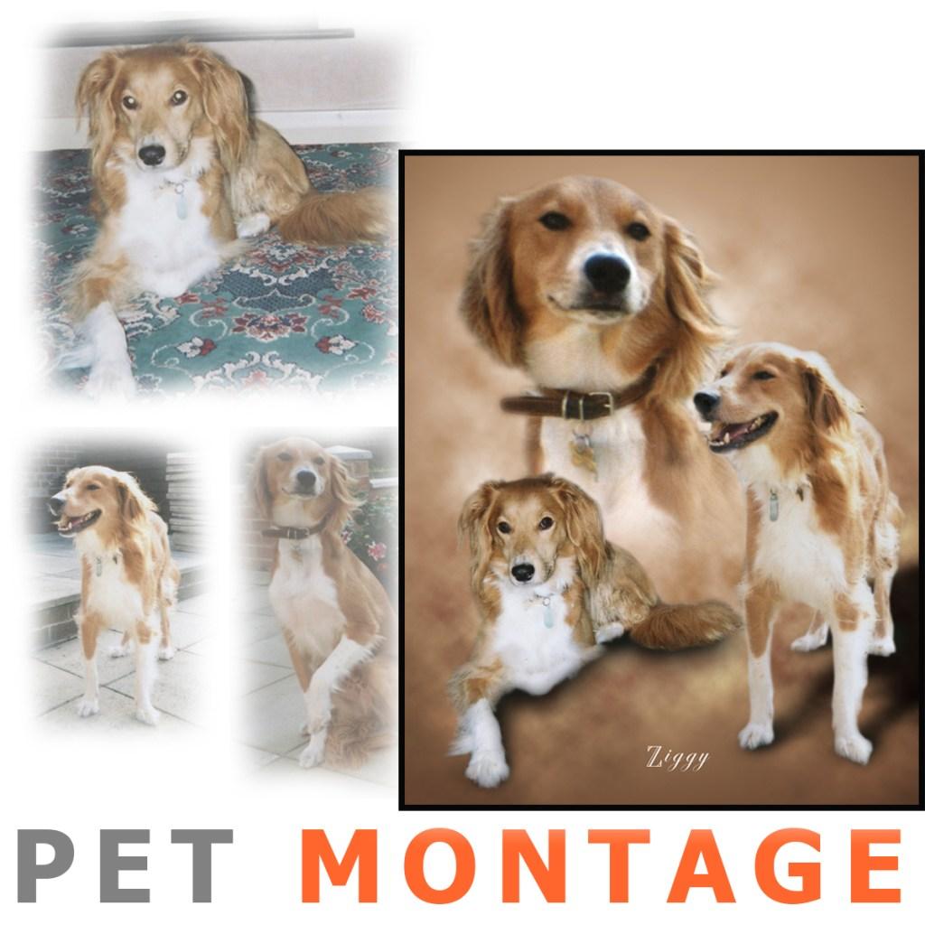 Pet Montages
