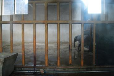 Caged and alone in China (photo China Zoo Watch)