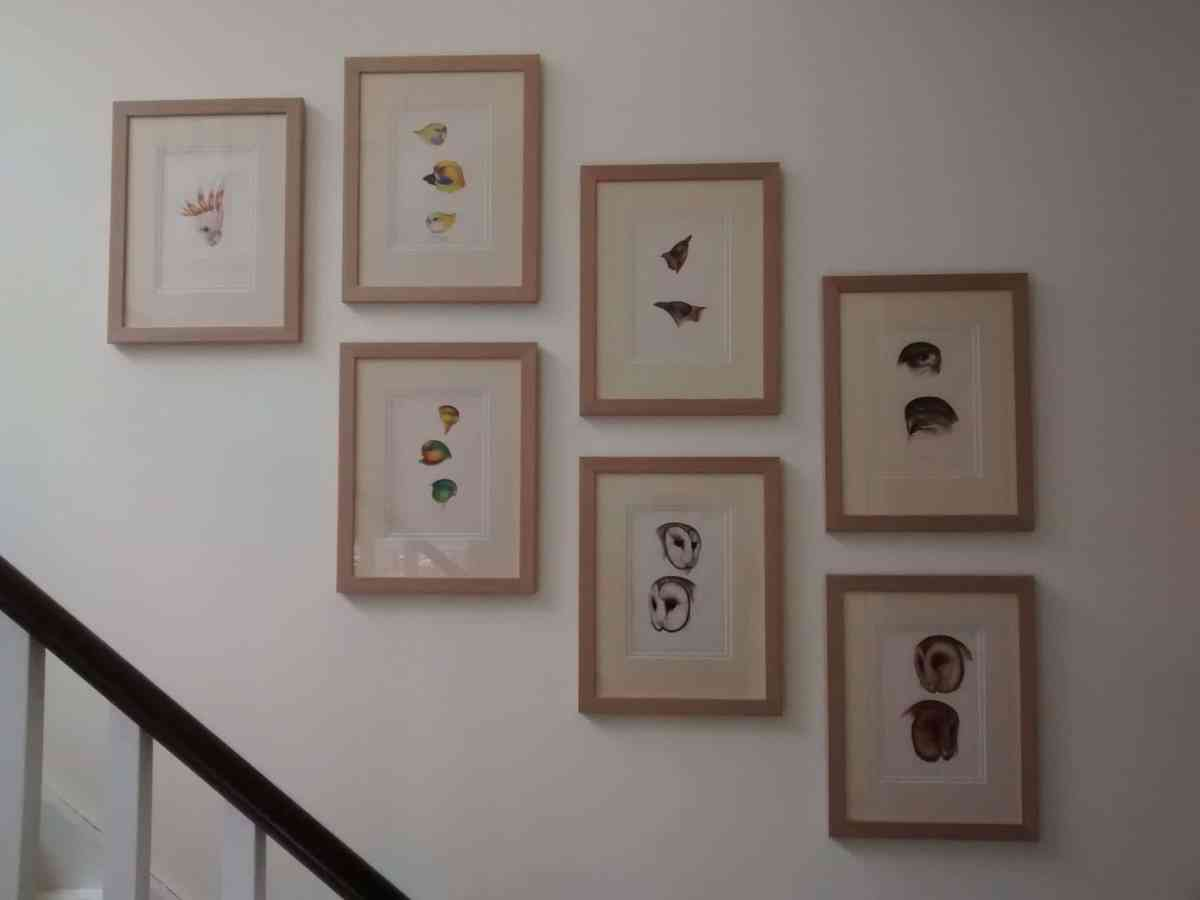 Seven pictures of birds hung along a staircase in Pimlico.