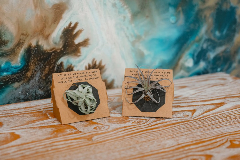 Air Plant Subscription Box