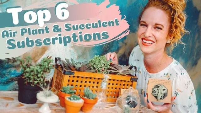 Best Air Plant Subscriptions and Succulent Subscriptions