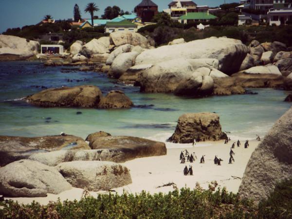 boulders beach_green cape town_annika ziehen