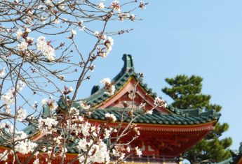 8 Cities you Should Visit in Japan