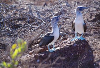 A Journey to the Wondrous World of the Galapagos Islands