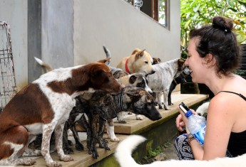 Dispatch: Exploring the Dog Meat Trade in Bali
