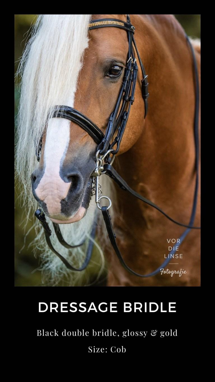 Pferde Outfits für künstlerische Fotografie oder Werbefotografie