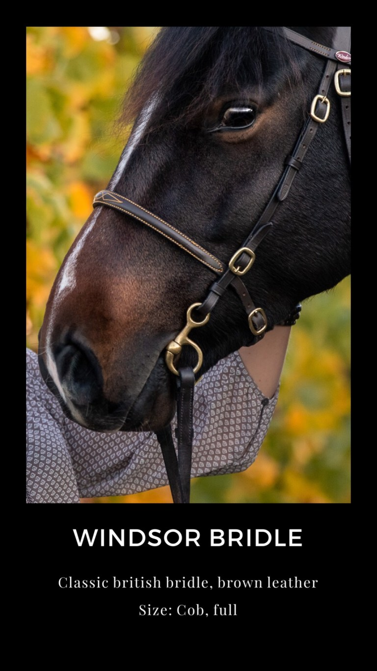 Equine Outfits for Fine Art Photosession and Advertising Photography