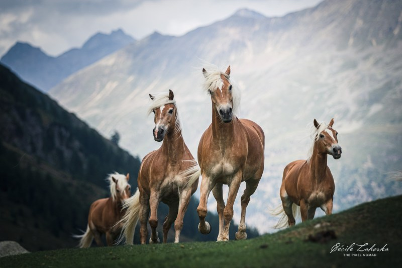 Equine Photo Expedition