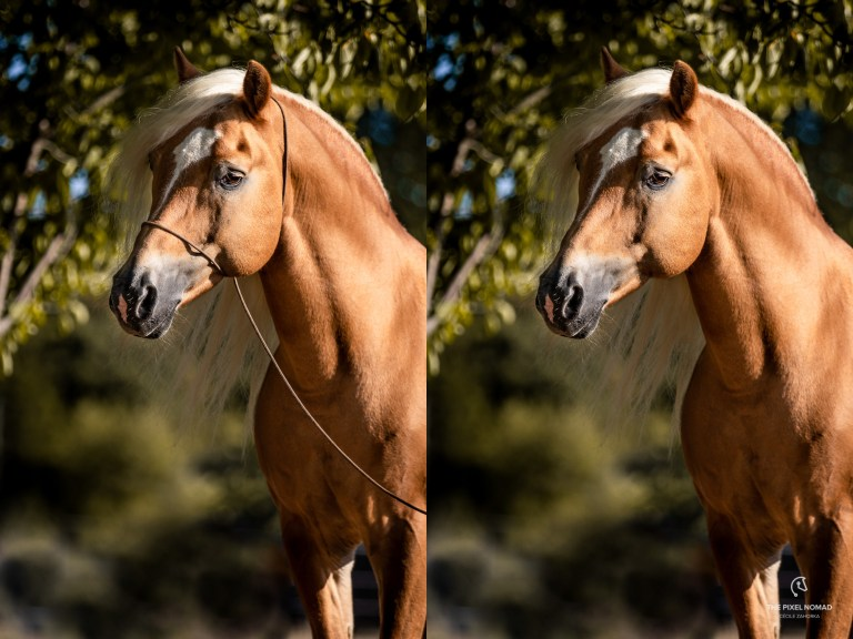 Photo halter before and after