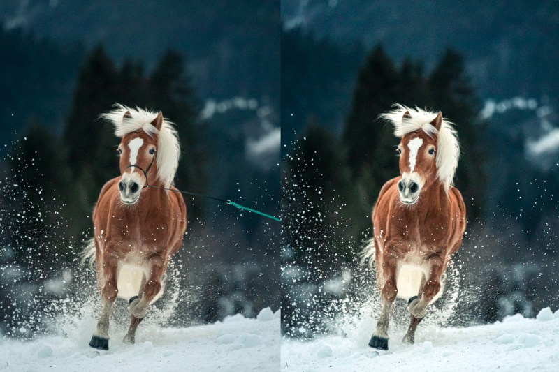 photo halter action photo before and after