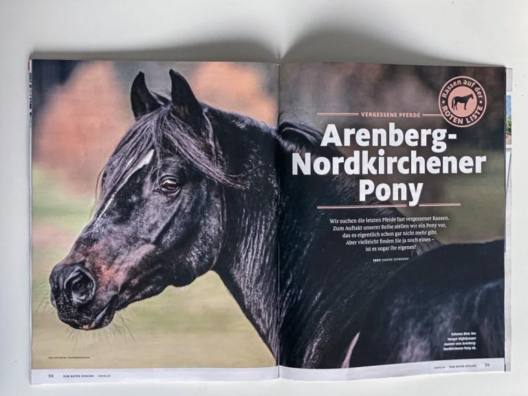 Publication in Cavallo 12/2020