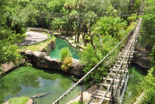 Alligator Bridges on Wild Africa Trek