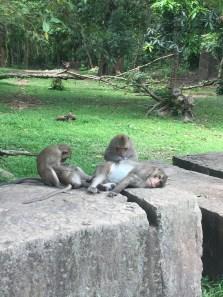 Finally saw some monkeys!