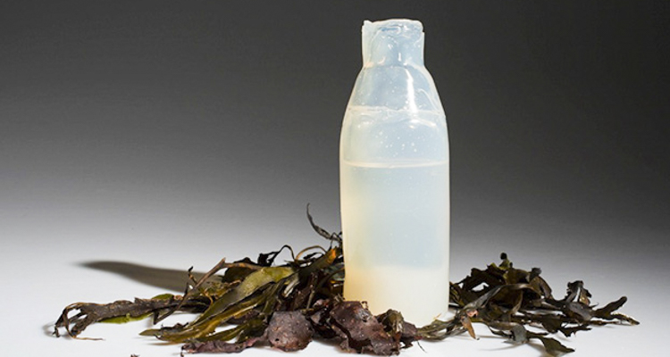 Water Bottle Made From Algae Could Save 50 Billion Plastic