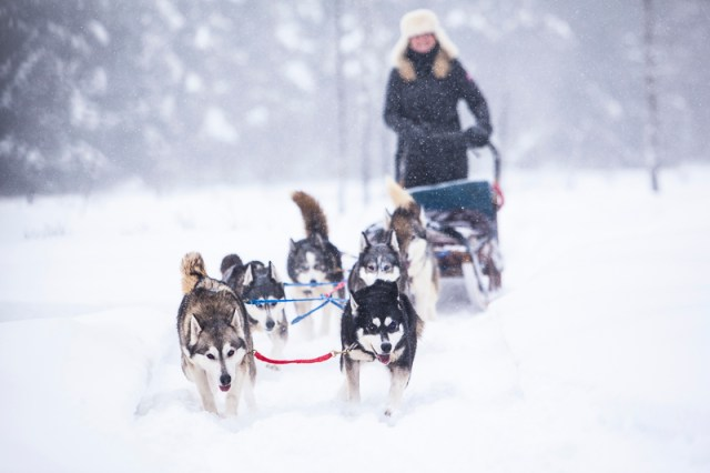 Discover the Temagami Region of Ontario by Dog Team