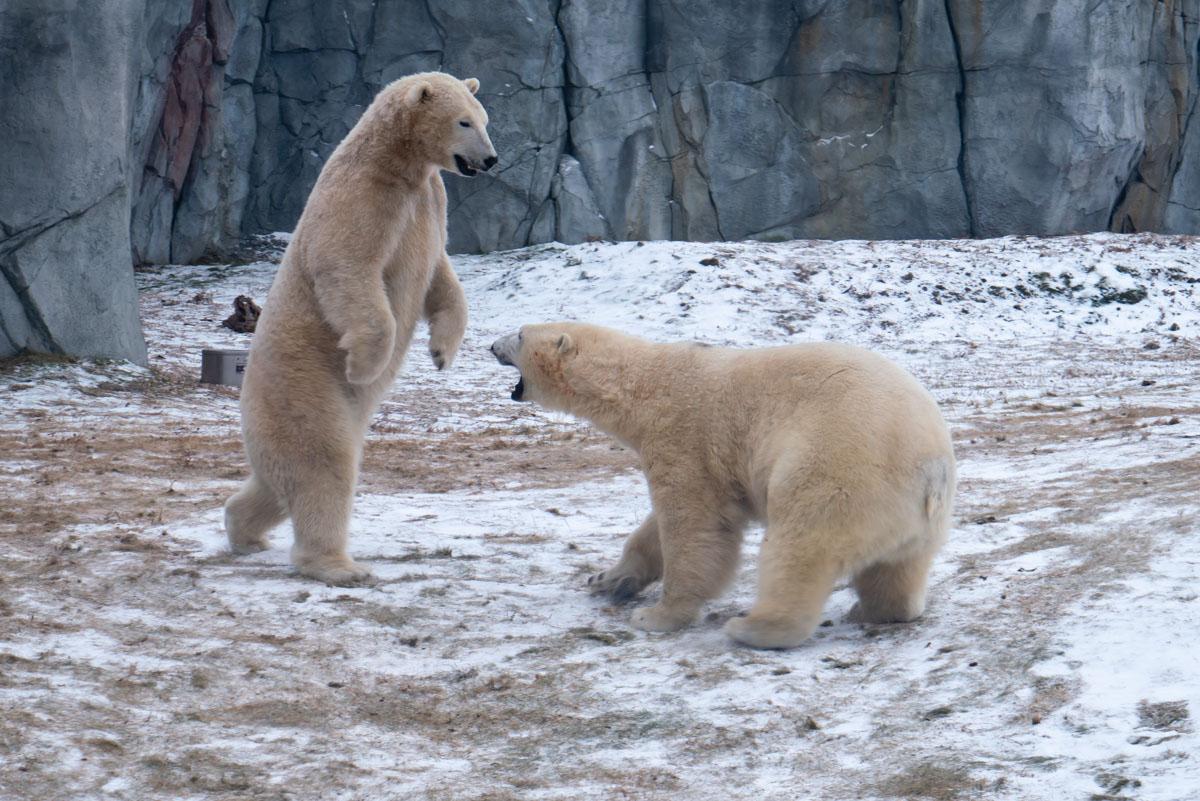 Adorable Tundra Animals