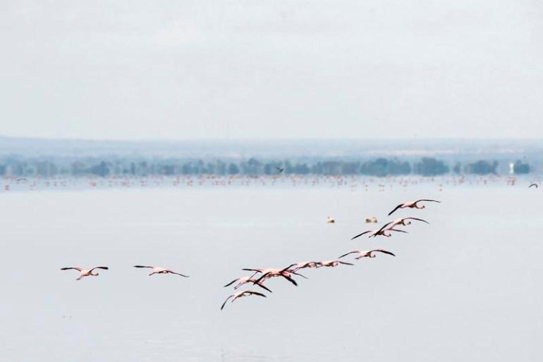 visit Tanzania lake Manyara