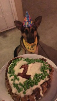 Anya, German Shepard, celebrating her first birthday! - Photo Submitted by Alicia Fleming