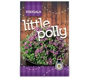 Polygala - Myrtifolia x Oppositifolia - Little Polly