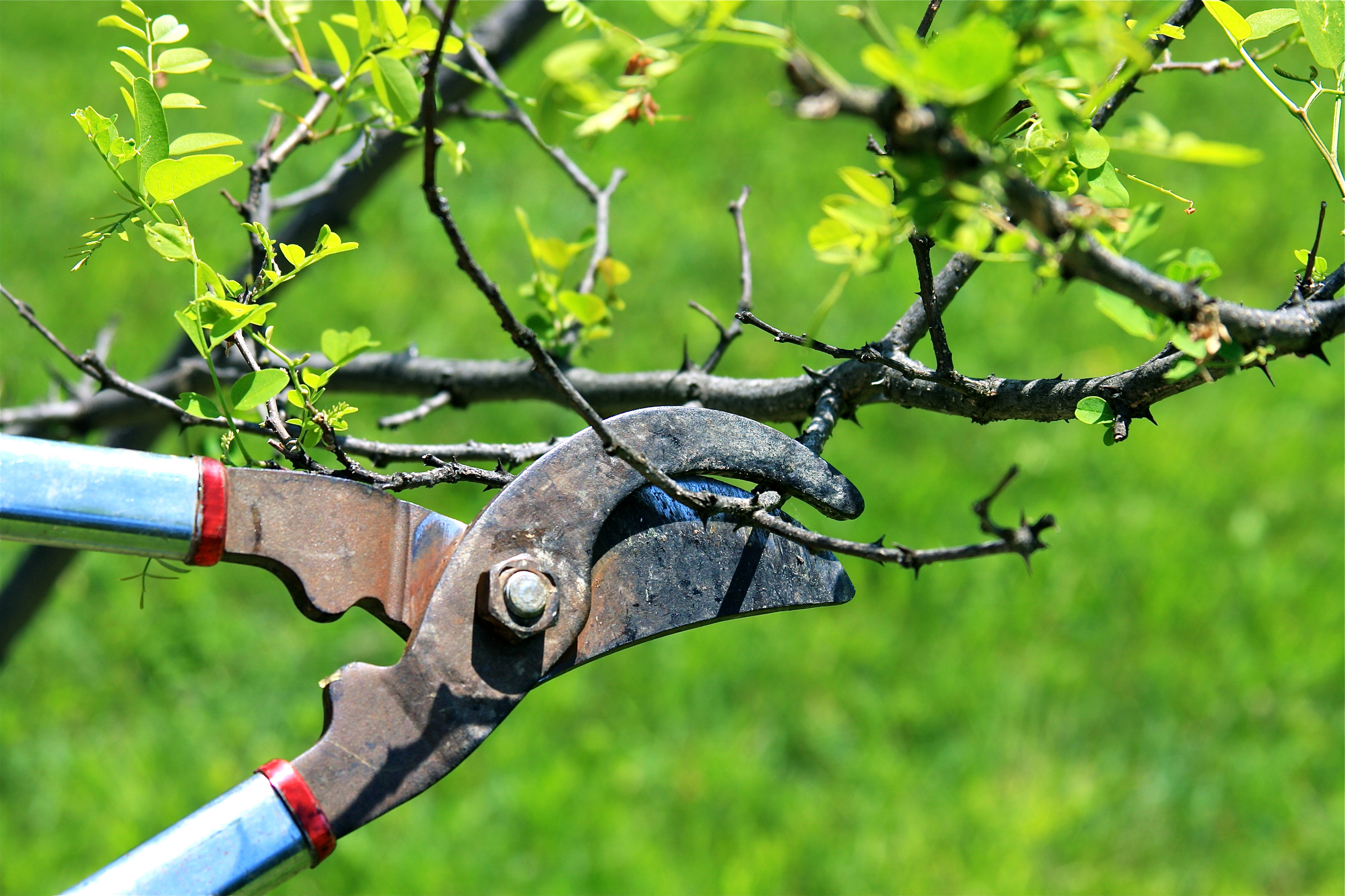 Creating Space for Fruit Trees  The Plant Farm