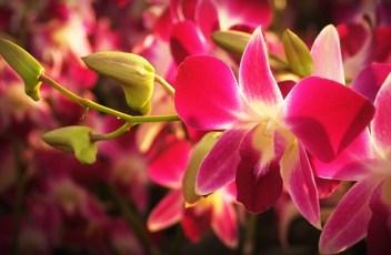 flower-1550893_640
