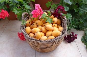 fruits-707149_1280