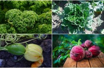 15 veggies