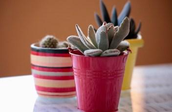 plants-2127114_1280