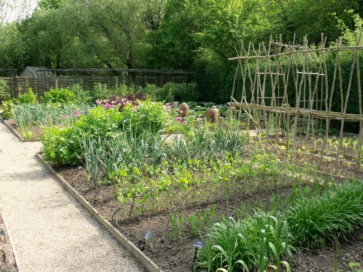 Ultimate Kitchen Garden Planner - The Plant Guide