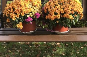 fall-1803752_640