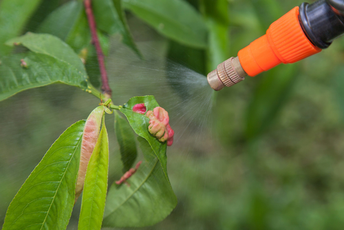How To Make Your Own Fungicide - The Plant Guide Homemade Plant Fungicide on homemade plant hormone, sulfur plant fungicide, homemade plant water, homemade plant fertilizer, homemade plant insecticide, homemade plant food, homemade plant pesticide,
