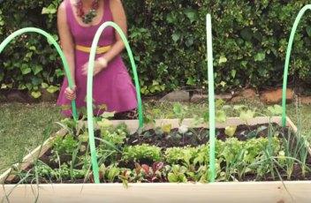 make-a-mini-green-house