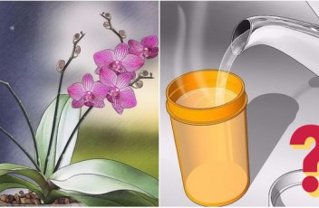 solution_orchids