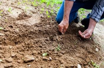 soil-2561136_640