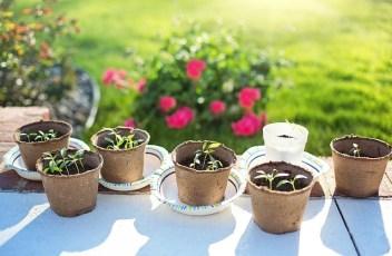 seedlings-2708679_640