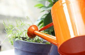 water-houseplants