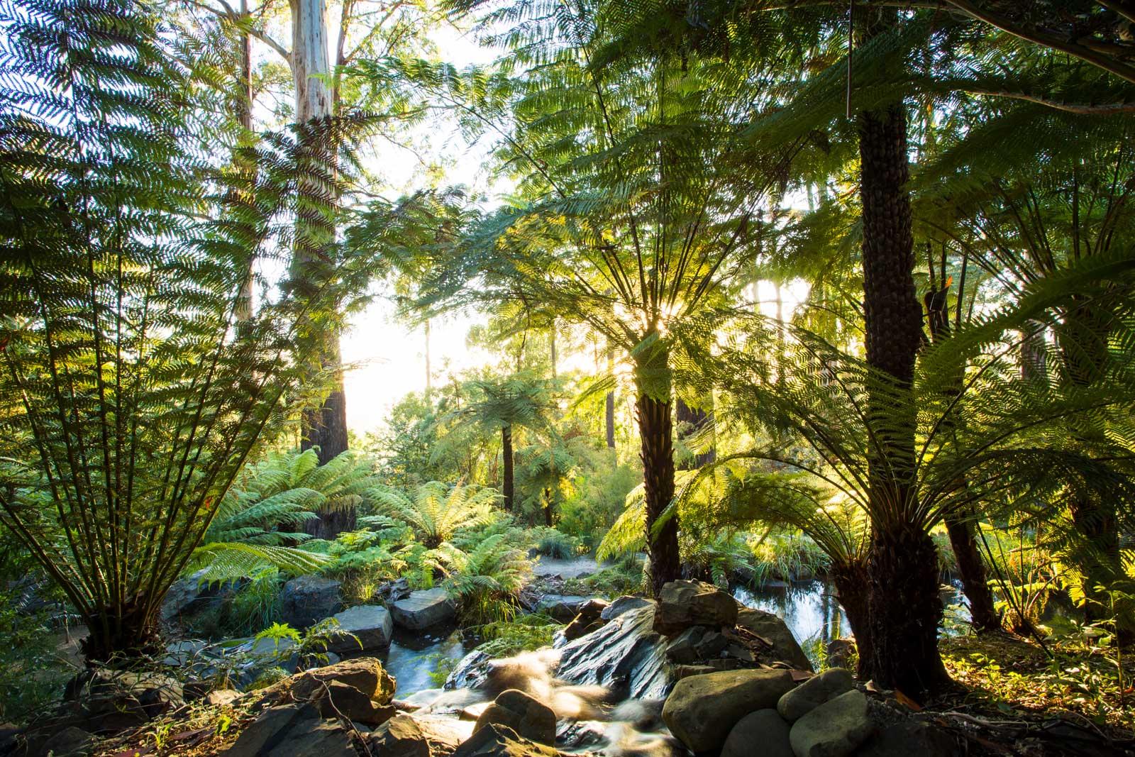 Phillip Johnson S Living Landscapes The Planthunter