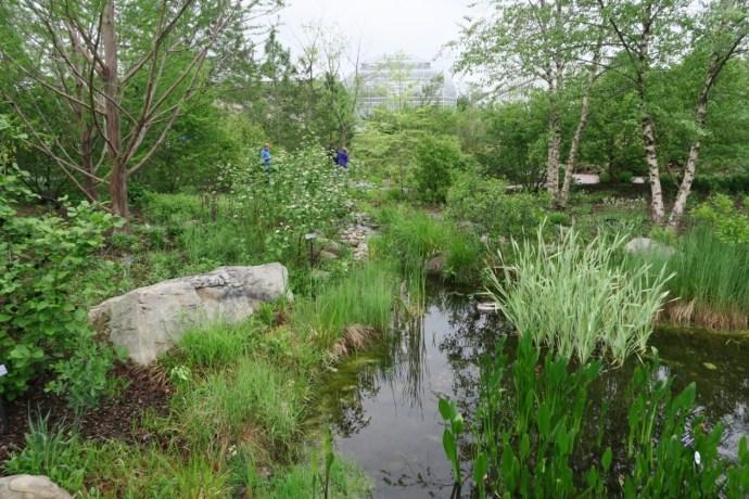 Water garden 2 NBG