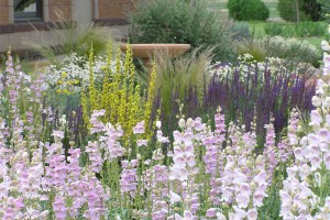 Beautiful Xeriscape