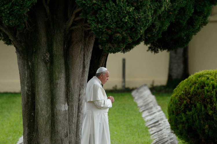 Pope planting trees