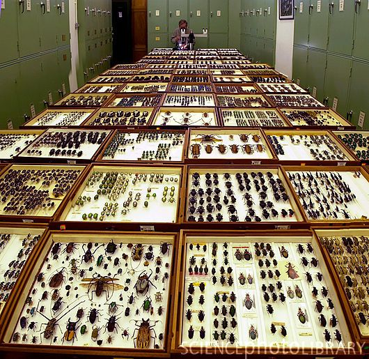 Natural History Museum Renamed