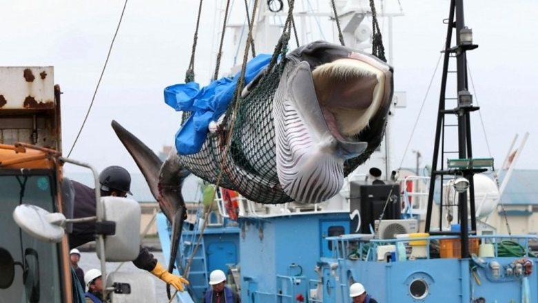 whaling Iceland Norway Japan